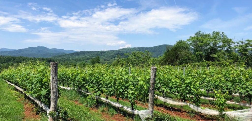 monticello ava virginia blue ridge mountains southwest virginia wine country